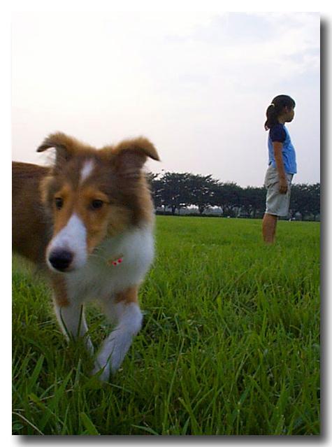 http://noguchan.lolipop.jp/pockey-001_copy.jpg